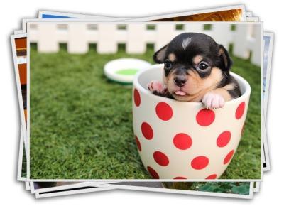 best free stock photo sites puppy