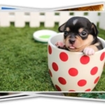 best free stock photo sites puppy